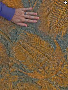 In 1916, French geologist Louis Gentil walked across the newly constructed airfield at Casablanca, picked up a fossil trilobite and kicked o...
