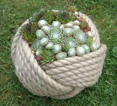 Rope Pot with Semps