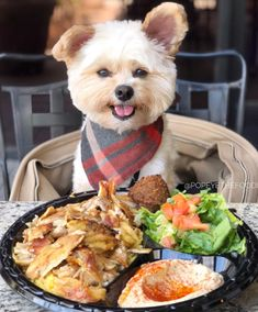 More On Yorkshire Terrier Facts Animals Toy Puppies, Cute Puppies, Cute Dogs, Dogs And Puppies, Doggies, Dogs And Kids, Little Dogs, Dog Eating Food, Cute Baby Animals