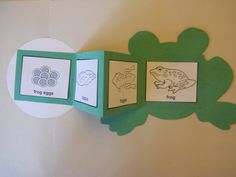 Life cycle of frog - flip book craft