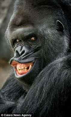 Richard the Gorilla Smile for the camera!