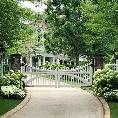 There's nothing quite as satisfying as green and white to define a garden in the heat of the summer. Drive and garden entryway to an estate by #howarddesignstudio. #green #greengarden #greenandwhite #hydrangea #hydrangeas #hydrangealove #softfocus #summertime