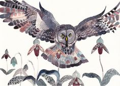 Grey Owl and Lady Slippers Large Archival Print by unitedthread