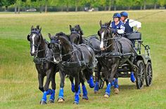 Carriage driving championship, obstacle course, held at Royal Windsor Great Park 2010. Michael Huggan Photography