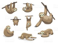 Sloth Poses Cartoon Vector Illustration royalty-free stock vector art