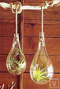 air plants in repurposed blown glass- great idea. Love the rope!