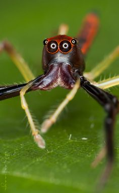 Shocked !! by Nadzli Azlan, via 500px Don't know what this is, but I don't like it one little bit!!!