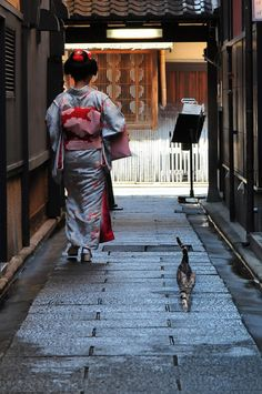 A Geisha and a cat cross paths in a back alley of Kyoto, Japan