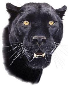 Black Panther Drawing, Black Panther Cat, Black Panther Tattoo, Black Cat Art, Jaguar Pictures, Tiger Pictures, Animal Paintings, Animal Drawings, Leopard Pictures
