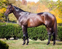 Summer Front(2009)(Colt) War Front- Rose Of Summer By El Prado. 3x4 To Northern Dancer, 5x5 To Nijinsky II & Mr Prospector. 23 Starts 8 Wins 6 Seconds 3 Thirds. $1,077,140. Won Ft Lauderdale S(G2T), Maimi Mile H(G3), Hill Prince S(G3T), Cliff Hanger S(G3T), King Cugat S(T), Dania Beach S(T), Duluth H, 2nd Frank E Kilroe Mile S(G1T), Eddie Read H(G1T), Shoemaker Mile S(G1T), Citation H(G2T), Fort Marcy H(G3T), Lexington S(G3), 3rd Secretariat S(G1T), Jamaica H(G1T). Entered Stud In 2016.