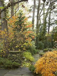 I love the garden in the Fall.