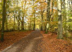 Four Seasons of the Kralingse Bos Togetherintransit.nl