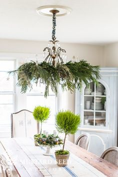 Share Some of you noticed the greenery hanging from my chandelier in the pictures I shared of myteacup & pedestal advent wreath and asked to see more and for me to share how I do it. So, that's what I'm doing today! Here's a better look at the chandelier in the dining room… I've been dressing my chandeliers for Christmas like this for a few years now and it's always the no-brainer in my holiday decor. It just looks so pretty and festive… …and it's so easy. I decided to shoot a quick…