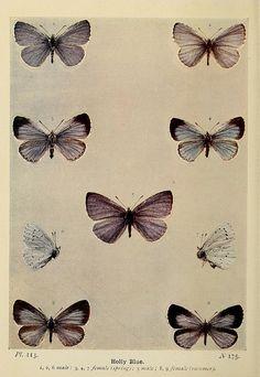 #blue #violet #butterflies