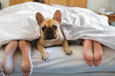 Having trouble sleeping? These insomnia-inducing habits could be to blame. Having trouble sleeping? These insomnia-inducing habits could be to blame. People Sleeping, Sleeping Dogs, Funny Horse Videos, Trouble Sleeping, Dog Friends, Good Night Sleep, Dog Bed, Labrador, Humor