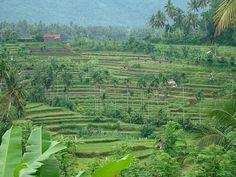 Tirta Gangga rice terraces, Bali