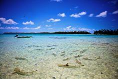 Rangiroa - Sharks