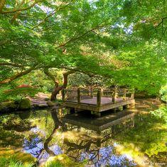 filtered light {Japanese Moon Garden San Francisco Botanical Garden}