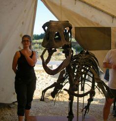 "Montage de ""Mimo"" sur le site d'Angeac-Charente. Montage, Giraffe, Photos, Animals, Giraffes, Animales, Animaux, Animal Memes, Animal"
