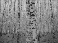 "williamcrisafi: "" "" Ivan's Childhood (1962) dir. Andrei Tarkovsky "" Dead """