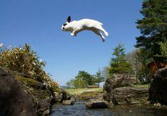 Jumping rabbit took by Mr.hirosan
