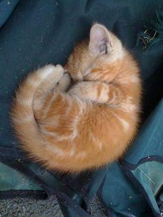 I love little orange kittens