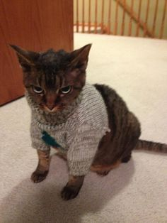 This cat who clawed his way to the top of the fashion world. | 17 Animals Who Look More Fab In Their Christmas Sweaters Than You Ever Will