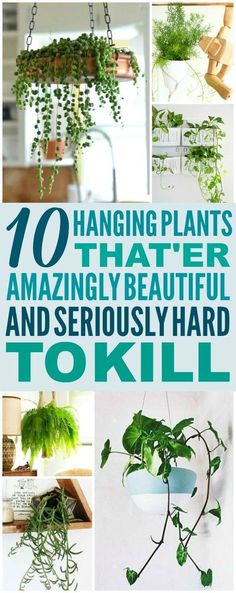 10 low maintenance hanging plants are THE BEST! I& so glad I ., These 10 low maintenance hanging plants are THE BEST! I'm so glad I ., These 10 low maintenance hanging plants are THE BEST! I'm so glad I . Outdoor Plants, Garden Plants, Outdoor Gardens, Porch Plants, Diy Garden, Backyard Plants, Nature Plants, Garden Shop, Spring Garden