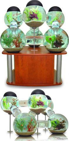 Coolest Aquariums