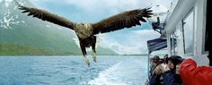 Up close to the big birds in Norway with Hurtigruten Cruises.