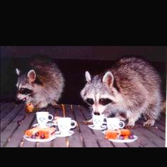 Reminds me of the raccoons that visited while I was in Boulder!  Maybe they were just waiting for tea time. What do you think @Lesley
