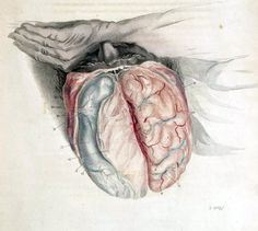 This illustration shows an open skull exposing the brain of a sleeping man. Another study showing that sleep is essential to a healthy brain:  Shorter Sleep Duration and Poorer Sleep Quality Linked to Alzheimer's Disease Biomarker