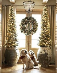 Waiting patiently for Santa..