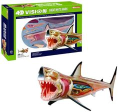 4D Vision Great White Shark Anatomy Model. A gift idea - toys for 8 year old boys Read more at http://www.toys-zone.com/4d-vision-great-white-shark-anatomy-model/