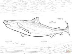 Free Printable Coloring Pages In Free Download Printable Crocodile Shark Coloring Pages Shark Coloring Pages Tiger Shark Shark Drawing