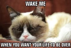 Grumpy cat sleeping ~ Wake me when you want your live to be over ~ Wake me when it's over