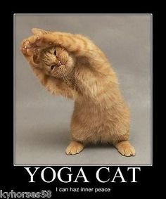 Funny Humor Yoga Cat Refrigerator Magnet for sale online Happy Animals, Cute Funny Animals, Silly Cats, Funny Cats, Orange Tabby Cats, Grumpy Cat Humor, Crazy Cat Lady, Funny Pictures, Husky