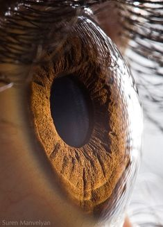 This should be a familiar one, since it's a human eye!