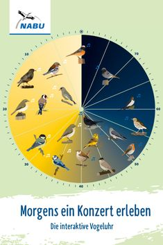 Interaktive Vogeluhr Especially in spring and summer, early risers can experience a true bird's voic Birds Voice, Balcony Plants, Garden Crafts, Bird Crafts, Nature Crafts, Before Sunrise, Garden Quotes, Gnome Garden, Bird Watching