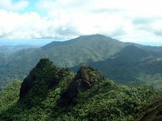 El Yunque Trail http://www.puertoricodaytrips.com/hike-the-el-yunque-trail/
