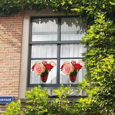static #windowfilm rose flowers that don't leave marks and never dies, genius right? :-)