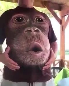 💖Bring laugh to everyone!💖 🤣Show to your around.🤣 awesome gift😝 Funny Animal Videos, Animal Memes, Funny Animals, Cute Animals, Funny Laugh, Stupid Funny Memes, Funny Humor, Funny Profile Pictures, Funny Pictures