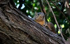 squirrel at LA Arboretum