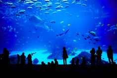 Shedd Aquarium has been nominated at one of the Top 10 aquariums in North America, 2014.  VOTE to help them become #1! ... USA Today ... #chicago #sheddaquarium