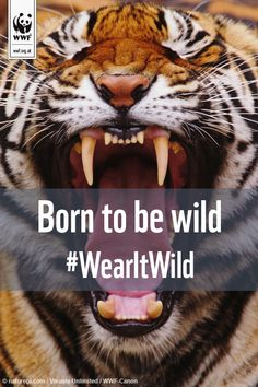 Wear it Wild today! http://www.wwf.org.uk/how_you_can_help/fundraising/wear_it_wild/?utm_source=pinterest&utm_medium=social&utm_campaign=wearitwild&pc=ANZ008010