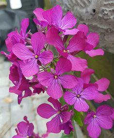 En plante med ett ansikt for hver sesong som kan såes nå! Plants, Plant, Planting, Planets