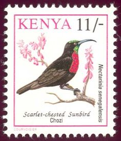 Stamps showing Scarlet-chested Sunbird Chalcomitra senegalensis, with distribution map showing range Postage Stamp Art, World 2020, Stamp Collecting, African Art, Continents, American Indians, Kenya, National Geographic, Birds