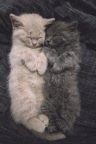 ♥ artonsun - cat♥