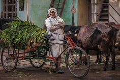 A grass delivery man in the old parts of the city of Ahmedabad in Gujarat, India