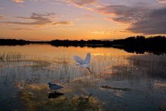 Best Natural Wonders in the South: The Everglades (Florida)